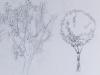 arbres avec leurs représentations