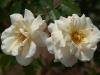 fleurs-14