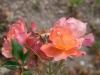 fleurs-15