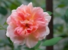 fleurs-19