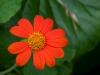 fleurs-34