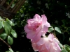 fleurs-40